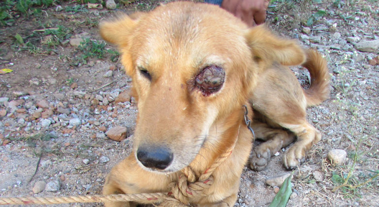 Give small Help for voiceless Animals