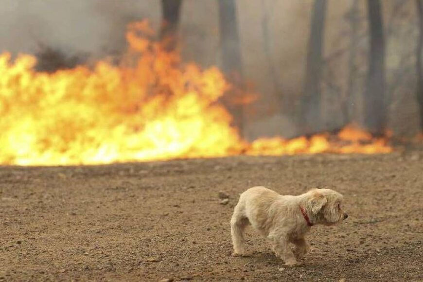 Save animals from fire!